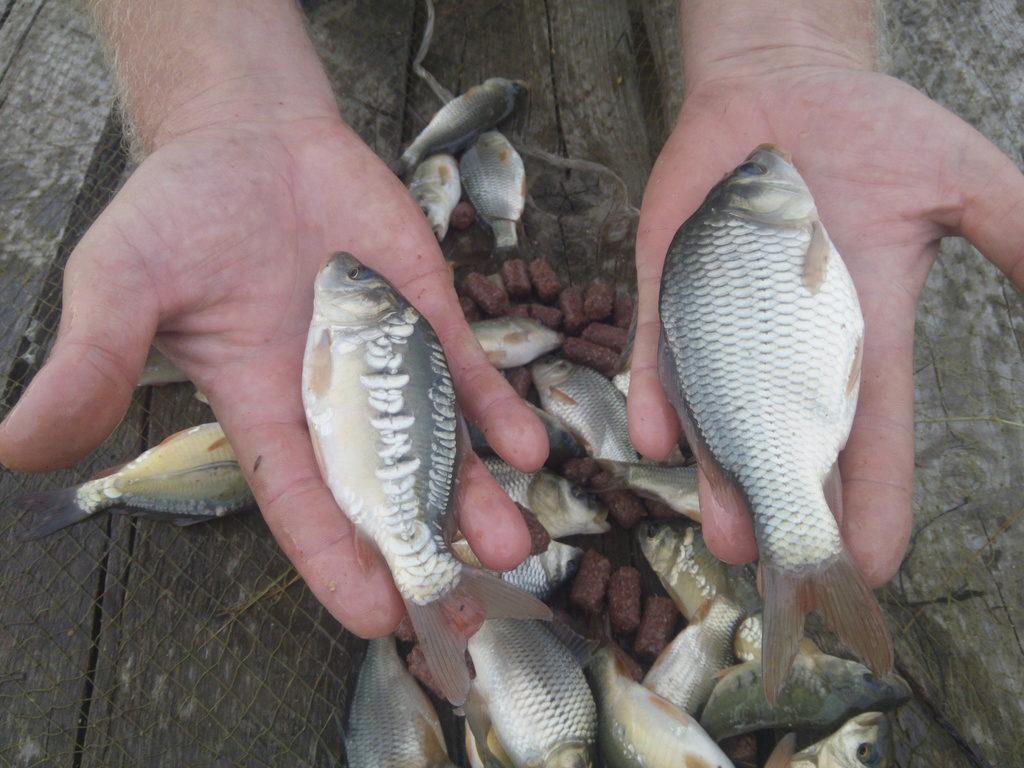 клев рыбы в новошахтинске